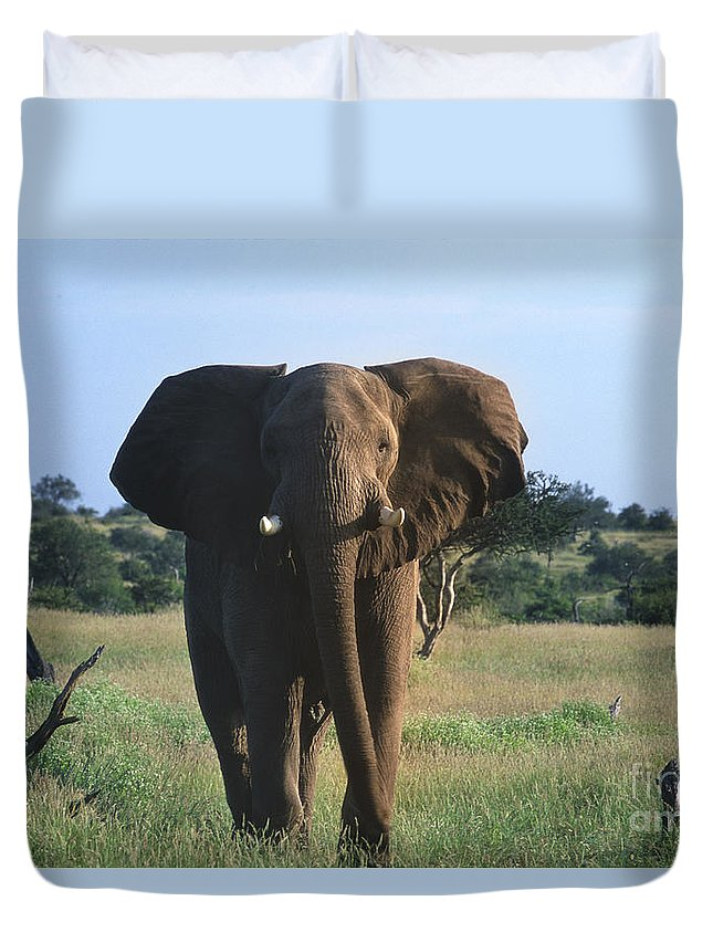 Africa Duvet Cover featuring the photograph Okay - We Are Going Now by Sandra Bronstein