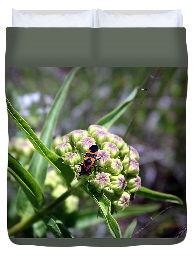 Salt Plains Duvet Cover featuring the photograph Oklahoma Beetle On Flower by Darla Wells