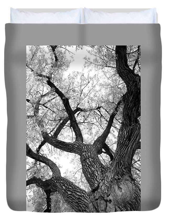 Cottonwood Duvet Cover featuring the photograph Old Cottonwood Tree by James BO Insogna