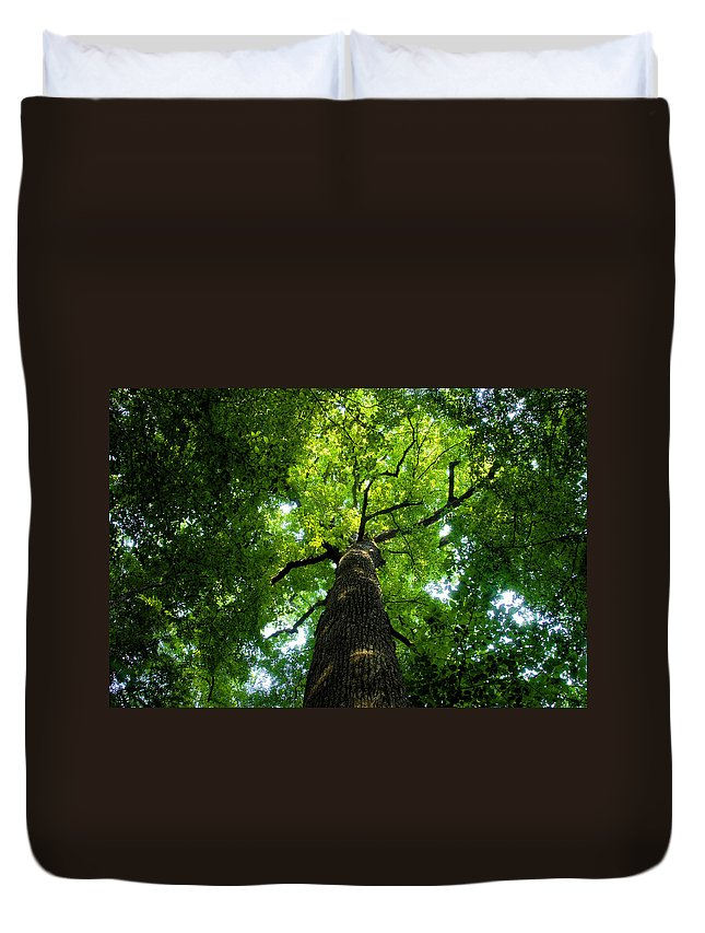 Old Growth Forest Duvet Cover featuring the painting Old Growth by David Lee Thompson