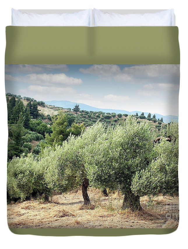 Olive Duvet Cover featuring the photograph Olive Trees Hill by Goce Risteski