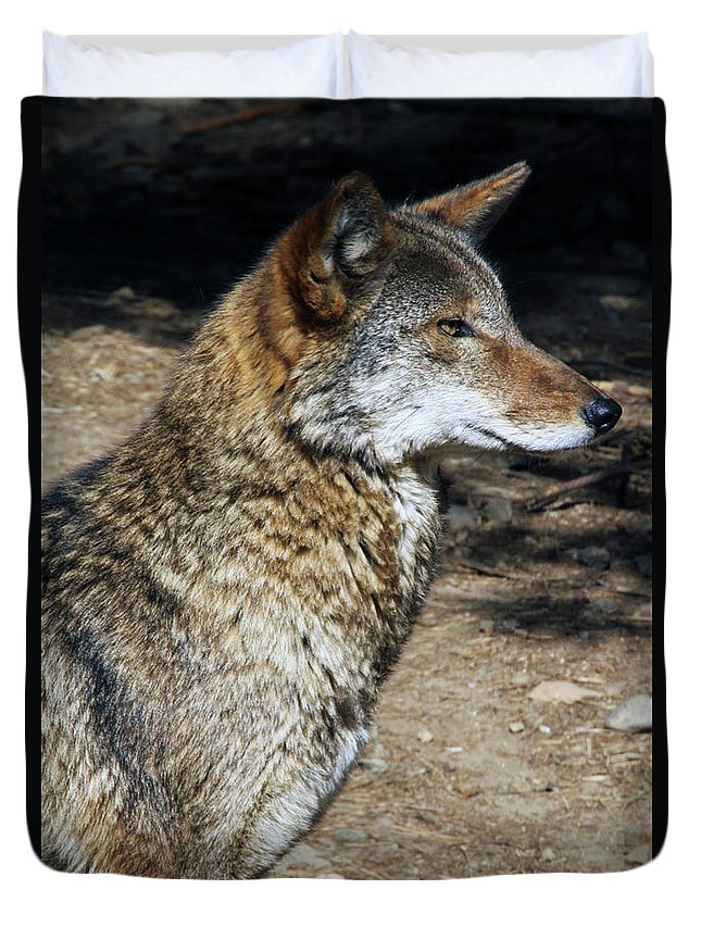 Wolf Duvet Cover featuring the photograph On Alert by Karol Livote