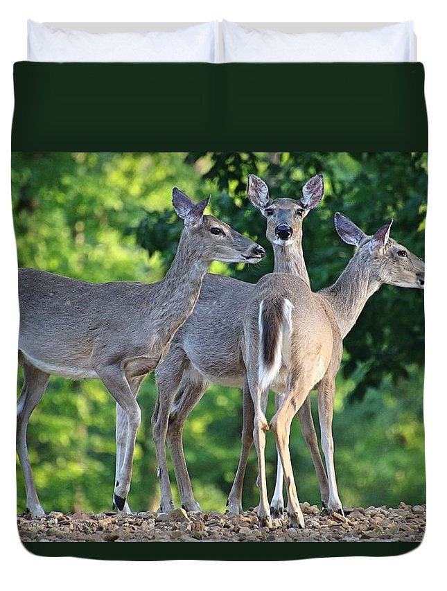 Deer Duvet Cover featuring the photograph On Guard by Bobbie Moller