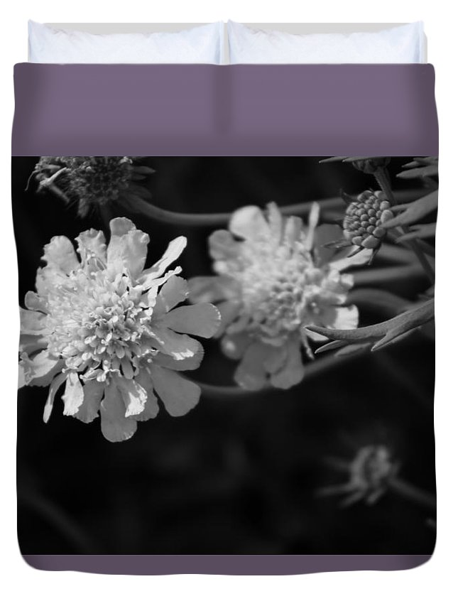 Pincushion Flowers Duvet Cover featuring the photograph On Pins and Needles a Black and White Photograph of Pincushion Flowers by Colleen Cornelius