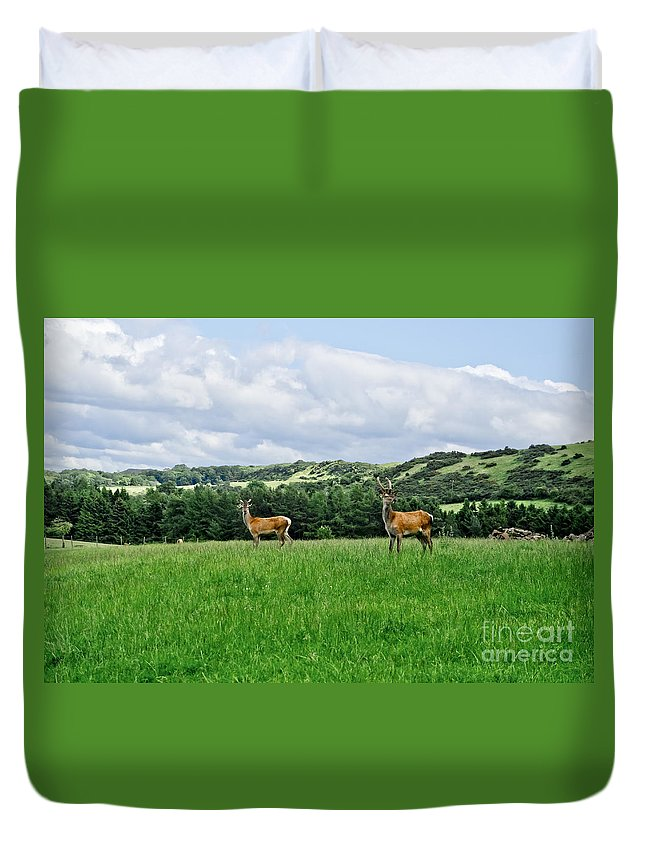 Beecraigs Duvet Cover featuring the photograph On The Alert. by Elena Perelman