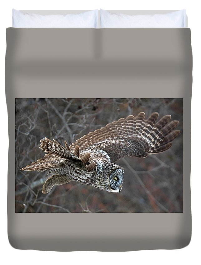 Birds Duvet Cover featuring the photograph On The Hunt by David Lipsy