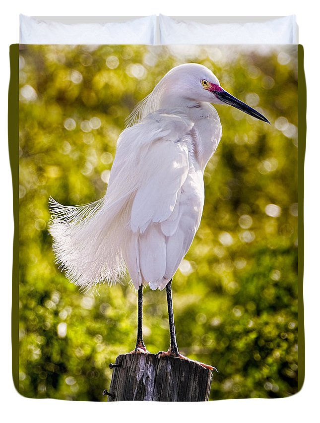 snowy Egret Duvet Cover featuring the photograph On Watch by Christopher Holmes