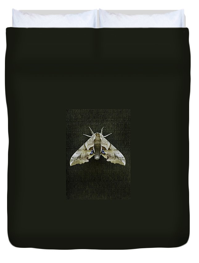 Moth Duvet Cover featuring the photograph One Eyed Sphinx Moth by Herman Robert