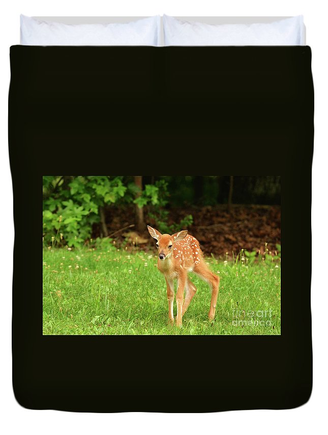 Fawn Deer Whitetail Deer Spots Grass Newborn Spring Summer Wildlife Nature Photography Photograph Walking Duvet Cover featuring the photograph One Step At A Time. by Gary Walker