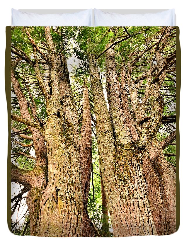 One Tree Six Trunks Duvet Cover featuring the photograph One Tree Six Trunks by Lisa Wooten