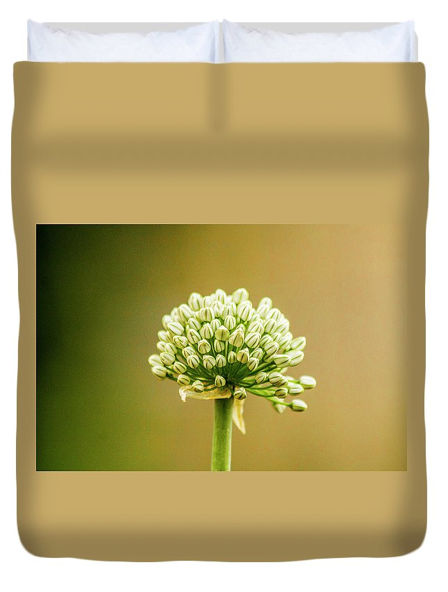 Garden Duvet Cover featuring the photograph Onion by Shauna Ruthenbeck