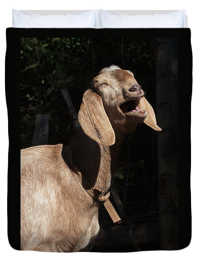 Goat Duvet Cover featuring the photograph Operatic Goat by Grant Groberg
