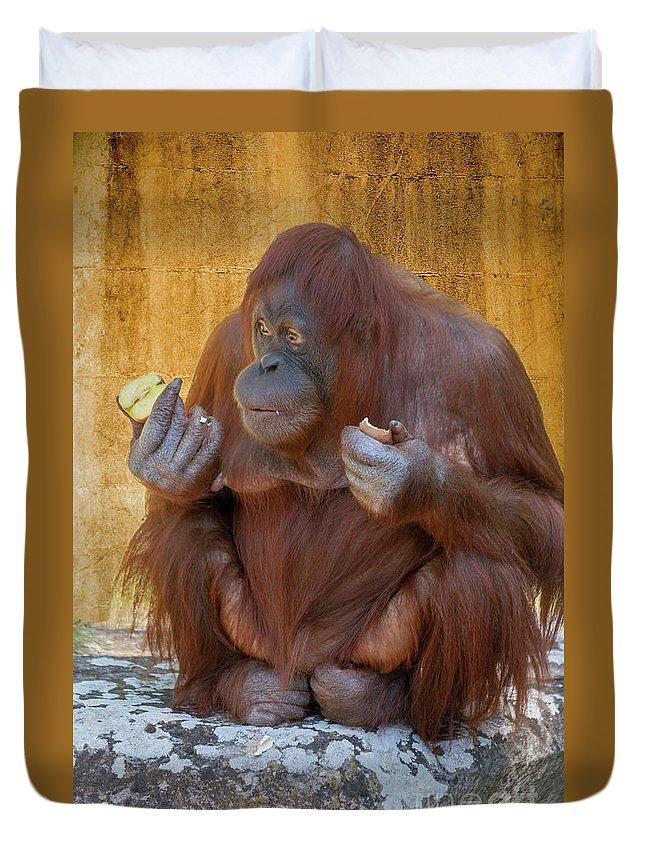Orang Untang Duvet Cover featuring the photograph Orang Utang Eating by Heiko Koehrer-Wagner