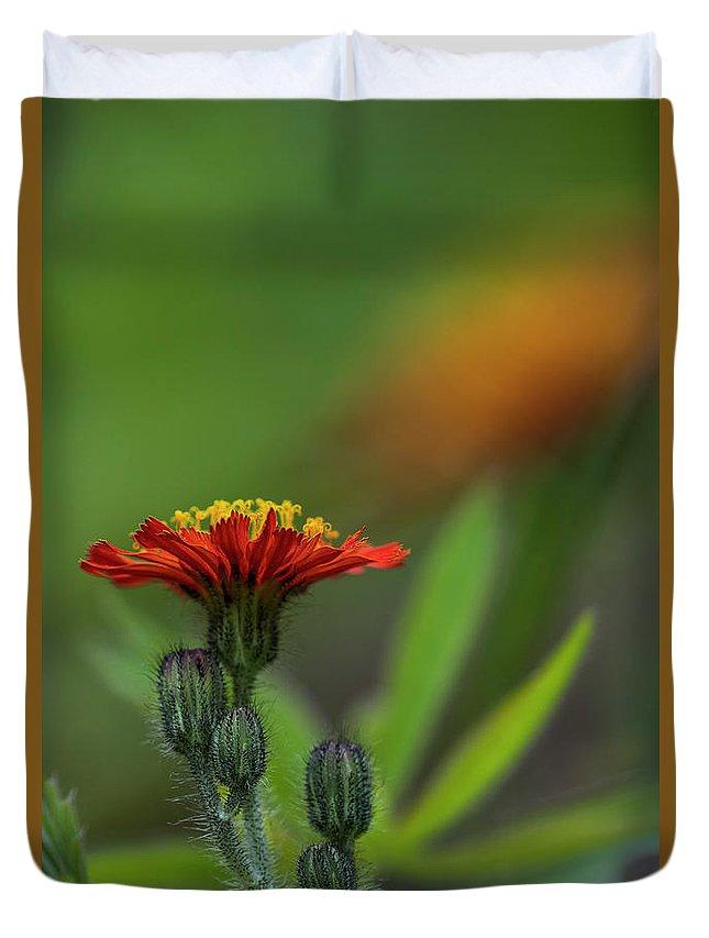 Astoria Duvet Cover featuring the photograph Orange Agoseris by Robert Potts