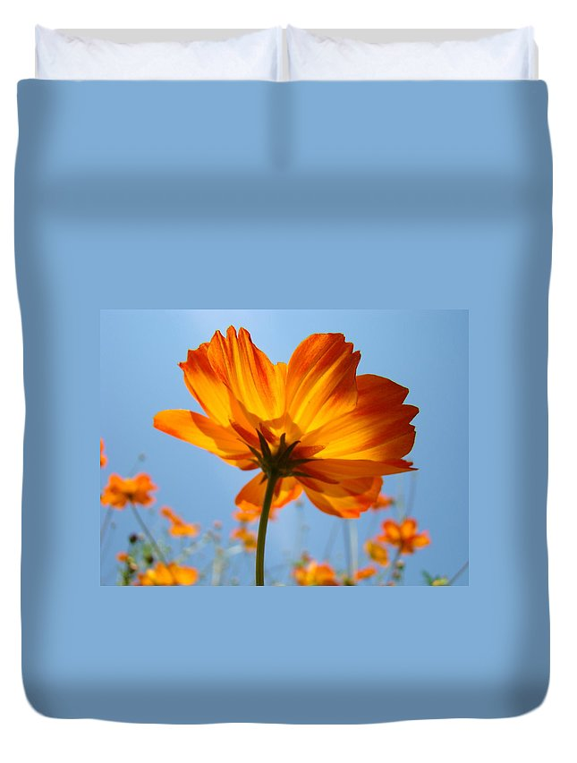Daisy Duvet Cover featuring the photograph Orange Floral Summer Flower Art Print Daisy Type Blue Sky Baslee Troutman by Baslee Troutman