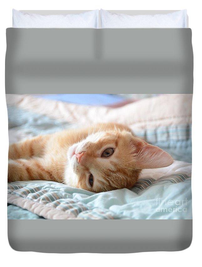 Animal Duvet Cover featuring the photograph Orange Kitten by Robert Buderman