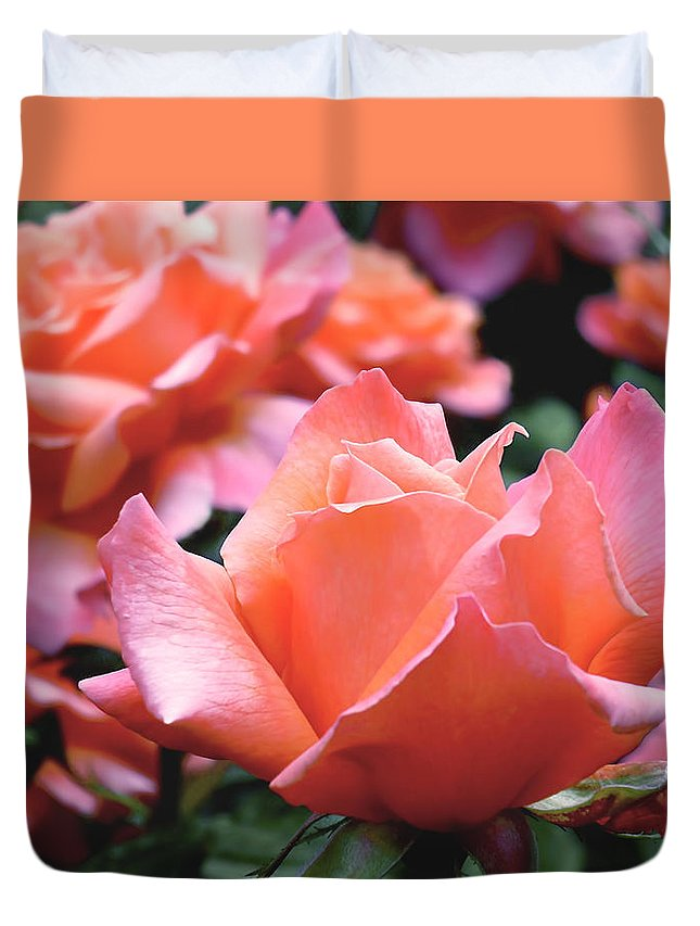 Rose Duvet Cover featuring the photograph Orange-pink Roses by Rona Black