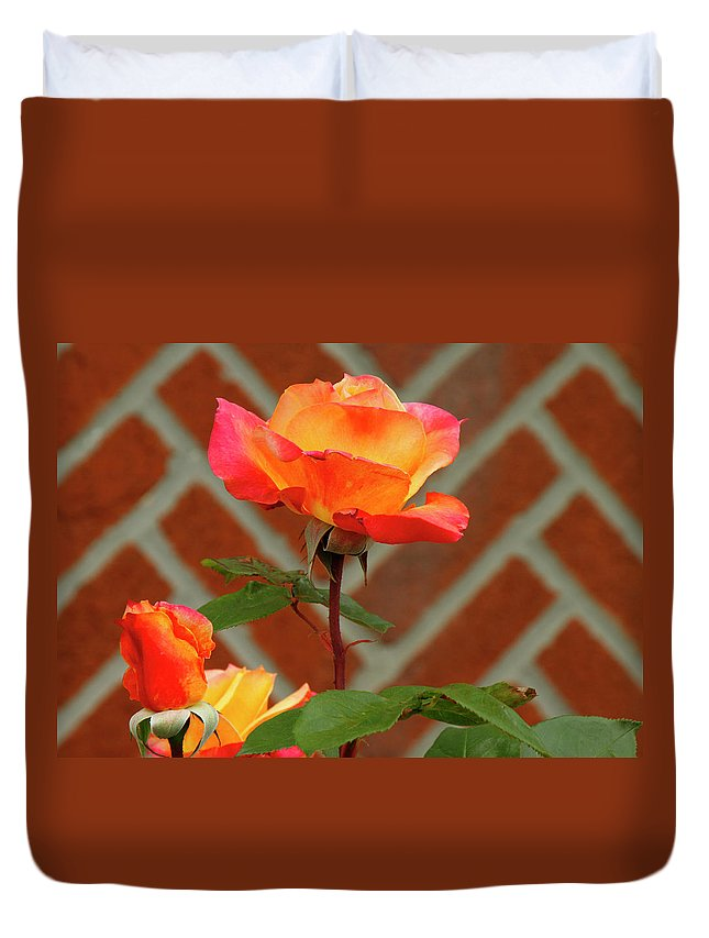 Red Duvet Cover featuring the photograph Orange Rose And Bricks by Cate Franklyn