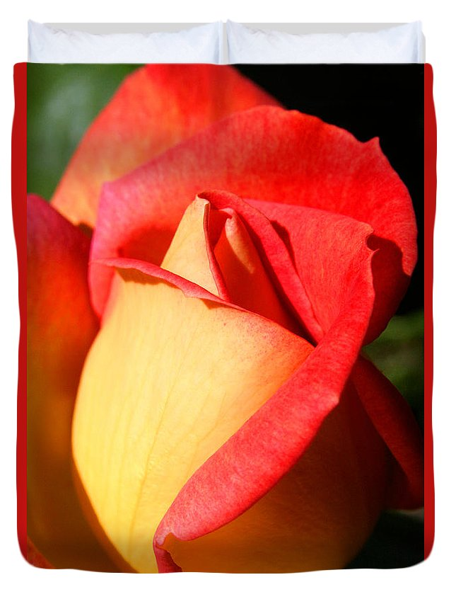 Orange Rosebud Duvet Cover featuring the photograph Orange Rosebud by Ralph A Ledergerber-Photography