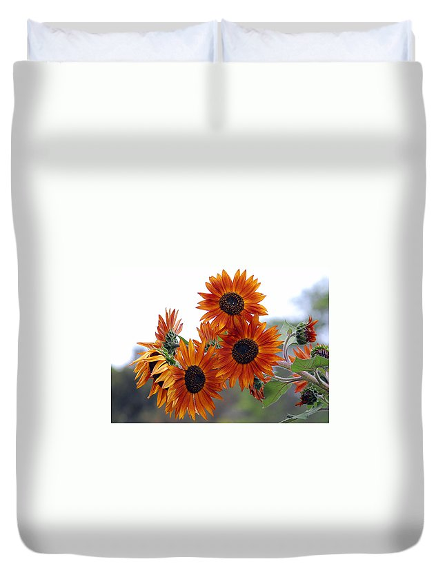 Sunflower Duvet Cover featuring the photograph Orange Sunflower 1 by Amy Fose