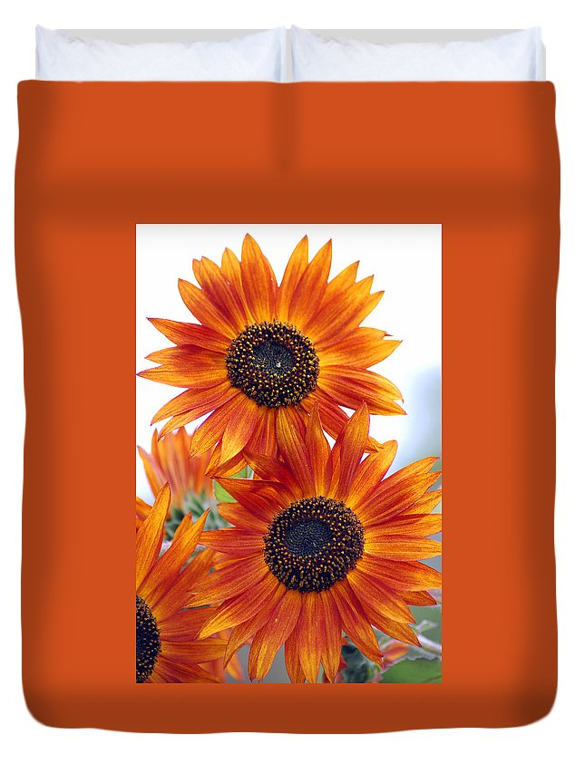 Sunflower Duvet Cover featuring the photograph Orange Sunflower 2 by Amy Fose