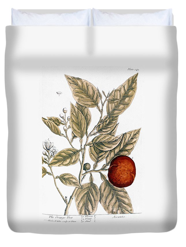 1730s Duvet Cover featuring the photograph Orange Tree, 1735 by Granger