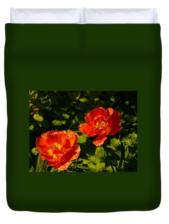 'orange Tulips' Duvet Cover featuring the photograph Orange Tulips In My Garden by Helmut Rottler