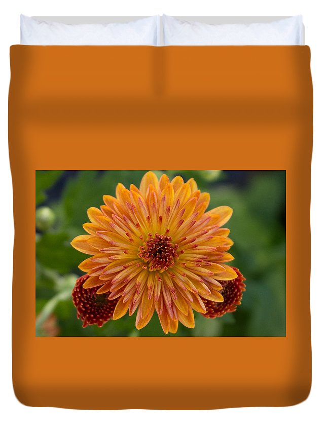 Flower Duvet Cover featuring the photograph Orangemum by Annie Formicola