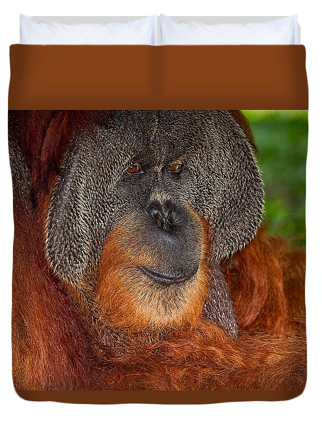Nature Duvet Cover featuring the photograph Orangutan Male by Louise Heusinkveld