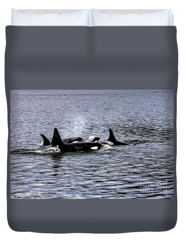 Orca Duvet Cover featuring the photograph Orcas, The Killer Whales by Kay Brewer