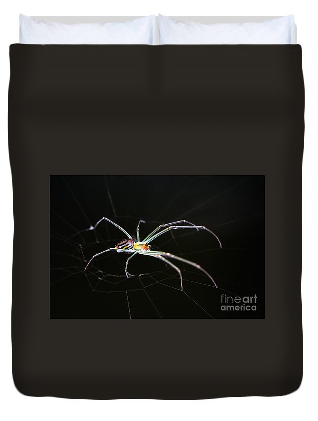 Orchard Orbweaver Spider Duvet Cover featuring the photograph Orchard Orbweaver Spider by Matt Suess