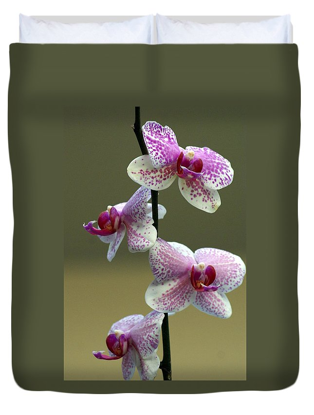 Flower Duvet Cover featuring the photograph Orchid 16 by Marty Koch