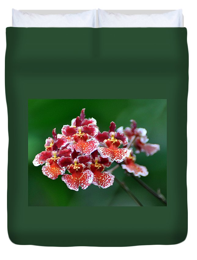 Orchid Duvet Cover featuring the photograph Orchid 31 by Marty Koch