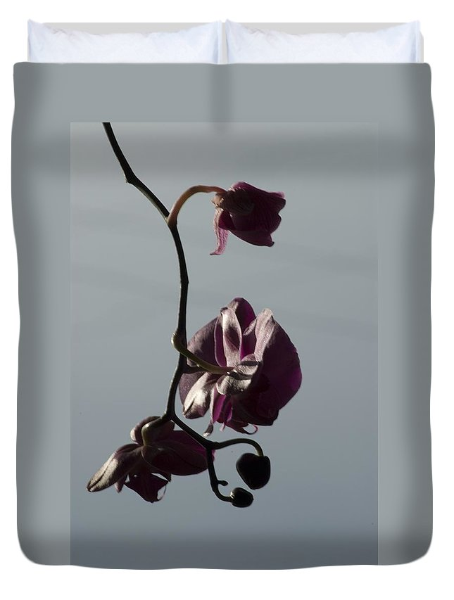 Flower Duvet Cover featuring the photograph Orchid by Sara Stevenson
