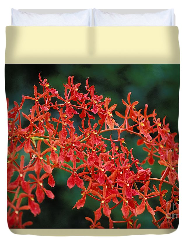 Attractive Duvet Cover featuring the photograph Orchids by Gloria & Richard Maschmeyer - Printscapes
