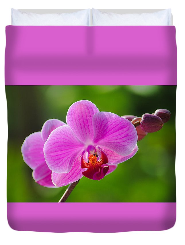 Orchid Duvet Cover featuring the photograph Orchids by Megan Martens