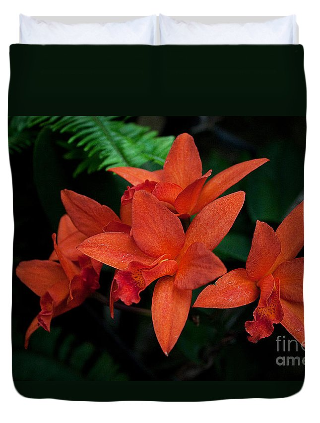 Orchids Duvet Cover featuring the photograph Orchids by Robert Sander