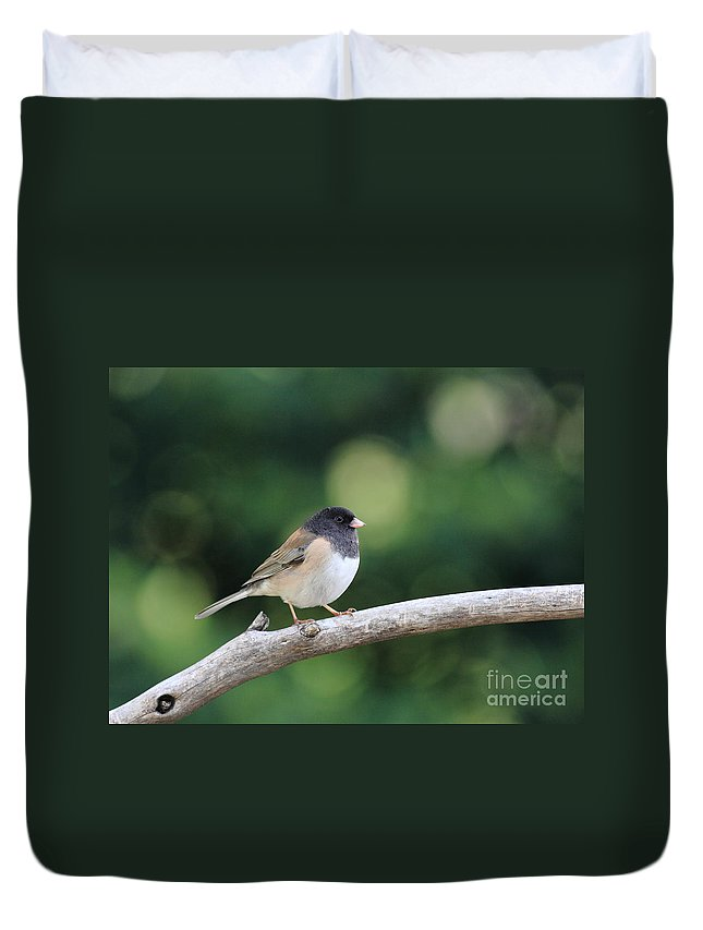 Wildlife Duvet Cover featuring the photograph Oregon Junco by Wingsdomain Art and Photography