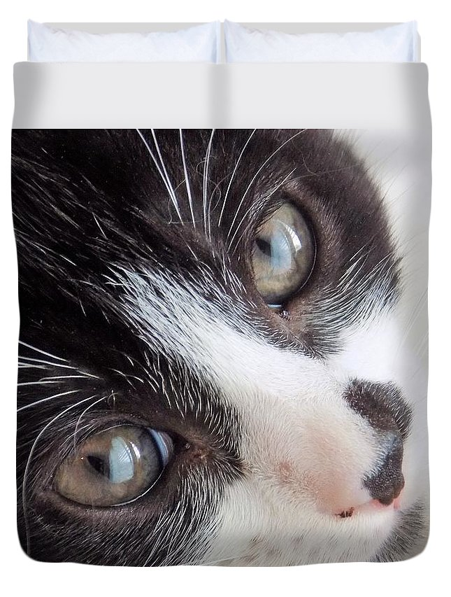 Kitten Duvet Cover featuring the photograph Oreo by Sarah Barba