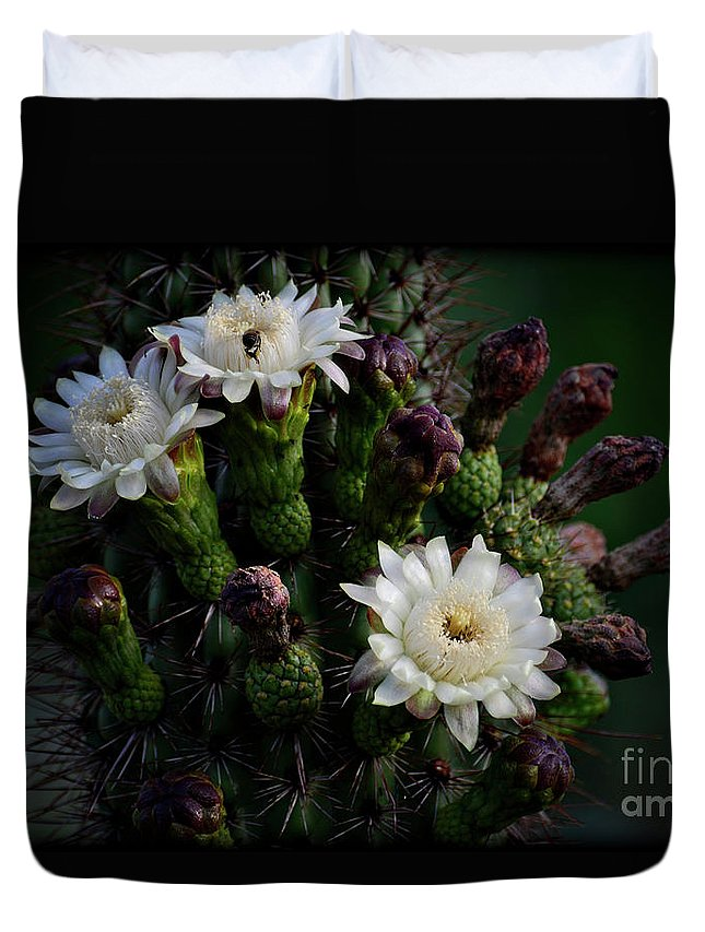 Organ Pipe Cactus Flowers Duvet Cover featuring the photograph Organ Pipe Cactus Flowers by Saija Lehtonen