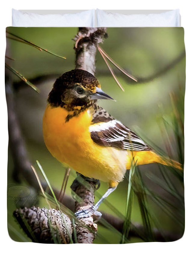 Bird Duvet Cover featuring the photograph Oriole And Pine Cone by Michael Johnk