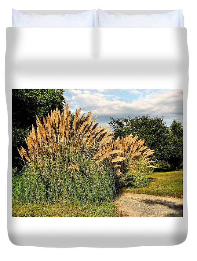 Ornamental White Pampas Grass-1 Duvet Cover featuring the photograph Ornamental White Pampas Grass-1 by Becky Hayes