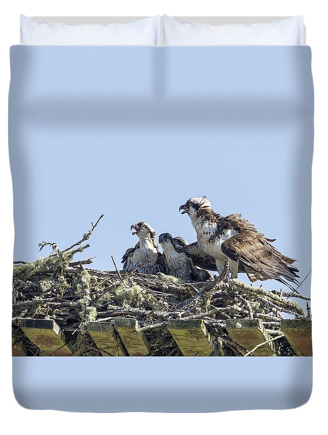 Osprey Duvet Cover featuring the photograph Osprey Family Portrait No. 2 by Belinda Greb