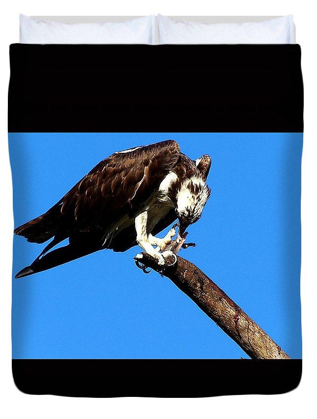 Osprey Duvet Cover featuring the photograph Osprey Feeding 014 by Chris Mercer