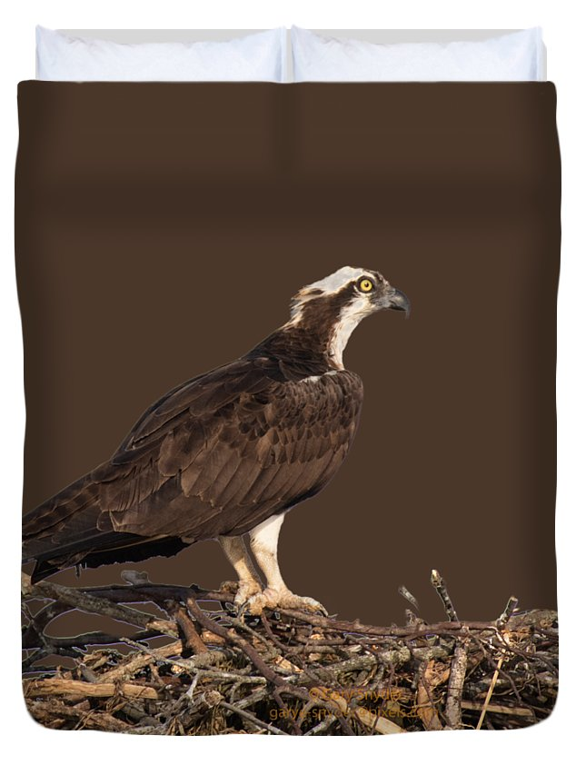 Osprey Duvet Cover featuring the photograph Osprey In Nest by Gary E Snyder