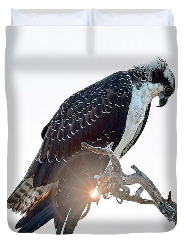Osprey Silhouette Duvet Cover featuring the photograph Osprey Silhouette by Patti Whitten