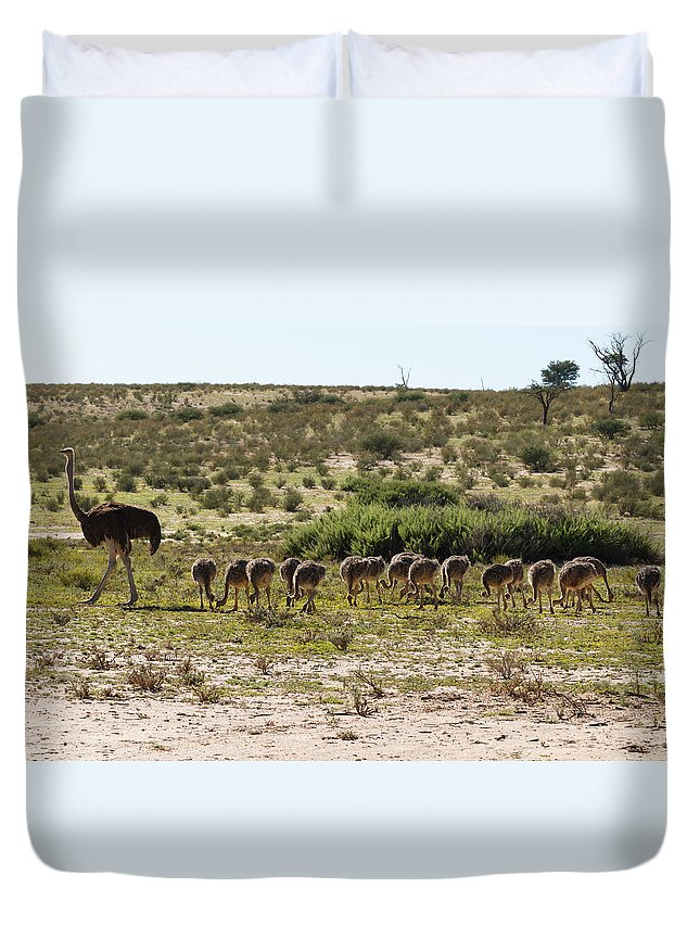 Kgalagadi Duvet Cover featuring the photograph Ostriches by Davide Guidolin