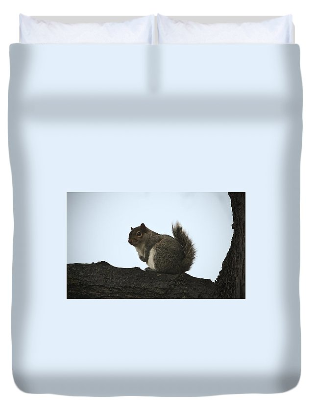 Squirrel Duvet Cover featuring the photograph Our Squirrel Chubby by Teresa Mucha