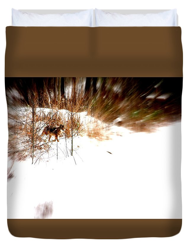 Coyote Duvet Cover featuring the photograph Out Of The Woods by Wanda Fuchs