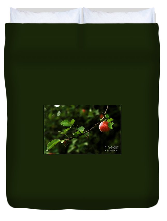 Adam And Eve Duvet Cover featuring the photograph Out On A Limb A Tempting Photograph Of A Tasty Ripe Red Apple On A Tree by Angela Rath